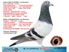 NL15-1274073 ERKEK / LEO HEREMANS % 100 INBRED DEN JAN - OLYMPIADE 003