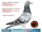 NL15-1567579 DİŞİ / EMBREGTS / THEUNİS