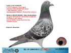 NL15-1890105 DİŞİ / KOOPMAN - FLOER ENGELS - GABY VANDENABEELE