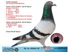 NL15-1598817 ERKEK / ORJ. HOK.M. REİJNEN - 40. FİNAL OLR BALKANİC FAİR PLAY 2015