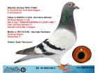 NL19-000100 DİŞİ / ORJ AYDIN VATANSEVER - DE RAUW SABLON
