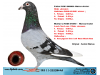 RO11-22228444 ERKEK / JANSSEN - LOUIS VAN LOON