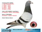 RO13-1001483 DİŞİ / KARDEŞİ 3. NAT. ROMANİA VİTES KLASMAN
