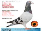 RO13-878847 ERKEK / GABY VANDENABEELE % 100