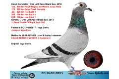 RO16-681038 DİŞİ / FİNAL 505 KM 132.  / JANSSEN - KOOPMAN