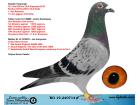 RO19-240714 ERKEK / KOOPMAN/ J. HOOYMANS - 32 FİNAL 390 KM OLR SÜPERSTAR