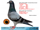 RO20-047628 ERKEK / BABASI RAOUL VESTRAETE OHLALA OGLU ANNESİ ARIE DIJKSTRA