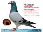 İSİM KÜNYELİ ERKEK / ORJ. METİN & MEHMET TOKALAÇOĞLU - A. & H. REYNAERT ( FİGO )