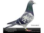 TR-06-68653 Van Der WEGEN/ Scorpion erkek