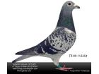 TR-09-112354 dişi,Deleus/ Kees Basua