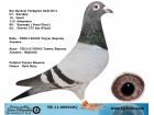 TR-11-009345 DİŞİ / JANSSEN