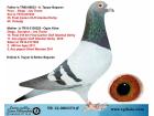 TR-12-000373 ERKEK / POCO - DİEGO - SCORPİON - JOS THONE MARATON