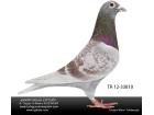 TR-12-033810 1-/As Türkgücüermeydanı kardeşi erkek