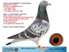 TR-14-037278 ERKEK / DİEGO - SCORPİON - JOS THONE MARATON