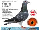 TR-14-040605 ERKEK / MARC POLLIN - ARİE DJKSTRA
