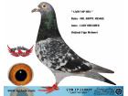 TR-17-110837 DİŞİ / VAN DYCK - DE RIJCK WALTER - KOOPMAN
