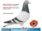 TR-17-112840 ERKEK / JOS THONE ( FORTUNA ) X JANSSEN