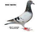 TR-17-144225 erkek, 5/As Kalimanci O.L.R oğlu