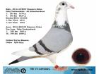 TR-17-147034 DİŞİ / GABY- VAN LOON - AD SCHAERLAECKENS