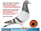 TR-18-195209 ERKEK / KEES BOSUA - STEKETEE - M.ROOSENS