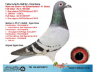 TR-18-207087 DİŞİ / AD SCHAERLACKENS - BOSUA - SİSTER KALİMANCİ ŞAMPİYONU