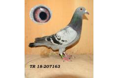 TR-18-207163 ERKEK 2-/As anneden kardeşi
