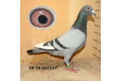 TR-18-207237 ERKEK Jansen /Van Loon  soylu