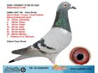 TR-19-022899 DİŞİ / ALBERT DERWA - G. LAHUİS - V.LOON - C. VERBREE