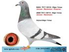 TR-19-025465 DİŞİ / JANSSEN - MEULEMANS - KOOPMAN