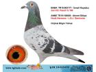 TR-19-025479 ERKEK / JAN V.D. PASCH - HUUB HERMANS - GEERİNCKX