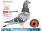 TR-19-055617 DİŞİ / MARC POLLİN - DESMET - G.PRANGE - KOOPMAN