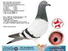 TR-19-058440 DİŞİ / AD SCHAERLAECKENS