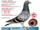 TR-19-058482 ERKEK / HOUBEN - GABY KARDEŞİ 1. 152 KM OLR SLİVEN 2019