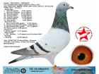 TR-19-058497 DİŞİ / GERRİT LAHUİS - DE RAUW SABLON