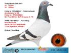 TR-19-059658 DİŞİ / ARİE DIJKSTRA - HUUB HERMANS