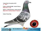 TR-19-059675 ERKEK / 11. IZMIT - MOENS WIN - DE RAUW SABLON - SAMURAI