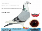 TR-19-105965 DİŞİ / L. B. & J. GEERINCKX % 100