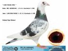 TR-19-105968 DİŞİ / L. B. & J. GEERINCKX % 100