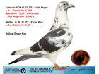 TR-19-106664 ERKEK / L.B.J. GEERİNCKX % 75