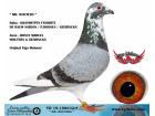 TR-19-108632 ERKEK / DE RAUW SABLON / P.ROOSEN / GEERINCKX