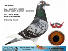 TR-19-108633 ERKEK / DE RAUW SABLON / P.ROOSEN / GEERINCKX