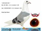 TR-19-115765 DİŞİ / L. B. & J. GEERINCKX % 100