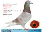 TR-19-116783 ERKEK / İGO FRANS - VAN LOON , ANNESİ 1. AS GÜVERCİN