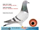 TR-19-209350 DİŞİ / VAN DE POL - VAN DYCK - PRÜT - VANLOON - GRONDELARS