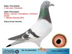 TR-19-209490 ERKEK / VAN LOON - HOREMANS - JANSSEN - DELEUS