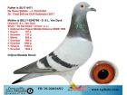 TR-19-220345 DİŞİ / DE RAUW ŞABLON - D. & L. VAN DYCK