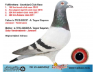 TR-19-220559 ERKEK / JANSSEN - VANBRUANE - GABY