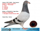 TR-20-052903 YAVRU / KOOPMAN - ŞABLON - DE KLAK