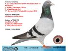 TR11-140166 ERKEK / KENDİSİ YARIŞMIŞ 4. 197 KM JOS THONE / DELEUS