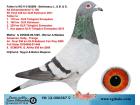 TR12-000387 DİŞİ / AD SCHAERLAECKENS , KOOPMAN , GABYİ , PRANGE